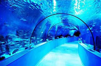 水族馆水体消毒